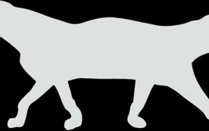 ליין Saturday DropOut של בוגרי BPM בשיתוף החתול והכלב